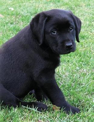 Black Labrador Puppy Notebook by Black Dog Art