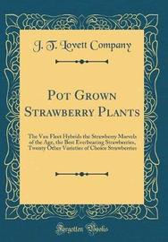 Pot Grown Strawberry Plants by J T Lovett Company image