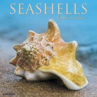 Sea Shells 2020 Wall Calendar by Willow Creek Press