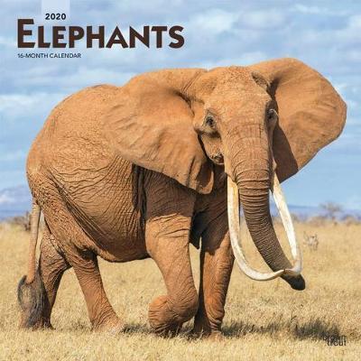 Elephants 2020 Square Wall Calendar image