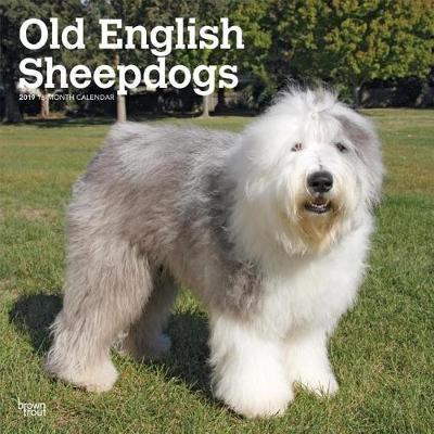 Old English Sheepdogs 2019 Square Wall Calendar by Inc Browntrout Publishers image