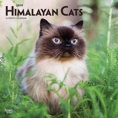 Himalayan Cats 2019 Square Wall Calendar by Inc Browntrout Publishers image
