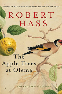 The Apple Trees at Olema: A Novel of Suspense by Robert Hass
