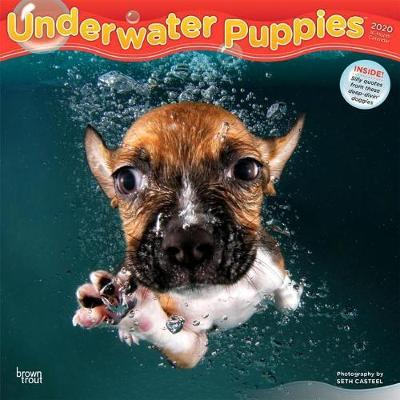 Underwater Puppies 2020 Square Wall Calendar