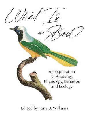 What Is a Bird? by Scott McWilliams