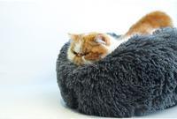 Ape Basics: Long Plush Warm Round Bed - Dark Gray (XL)