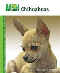 Chihuahuas by Richard Miller