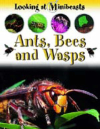 Ants, Bees and Wasps by Sally Morgan image