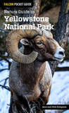 Nature Guide to Yellowstone National Park by Ann Simpson