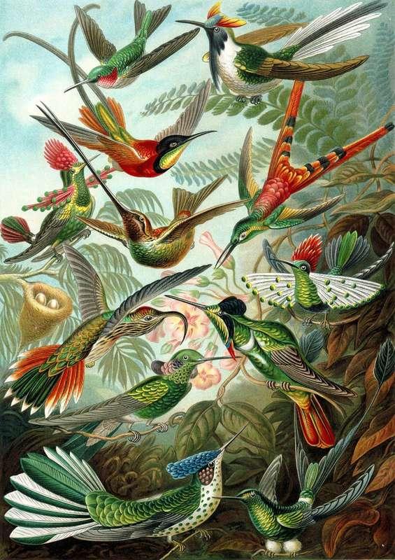Madam Treacle: Humming Birds Multi-Purpose Card