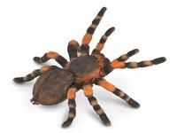 CollectA - Mexican Redknee Tarantula image