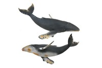 CollectA - Humpback Whale