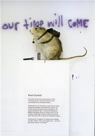 Blue Island Press Cards: Banksy - Pest Control