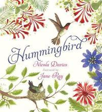Hummingbird by Nicola Davies image