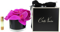 Côte Noire Perfumed Natural Touch Butterfly Orchids in Black (Pink Blossom)
