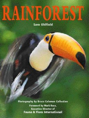 Rainforest by Sara Oldfield image