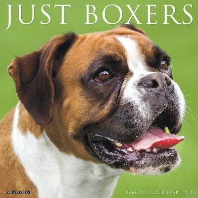 Just Boxers 2020 Wall Calendar (Dog Breed Calendar) by Willow Creek Press
