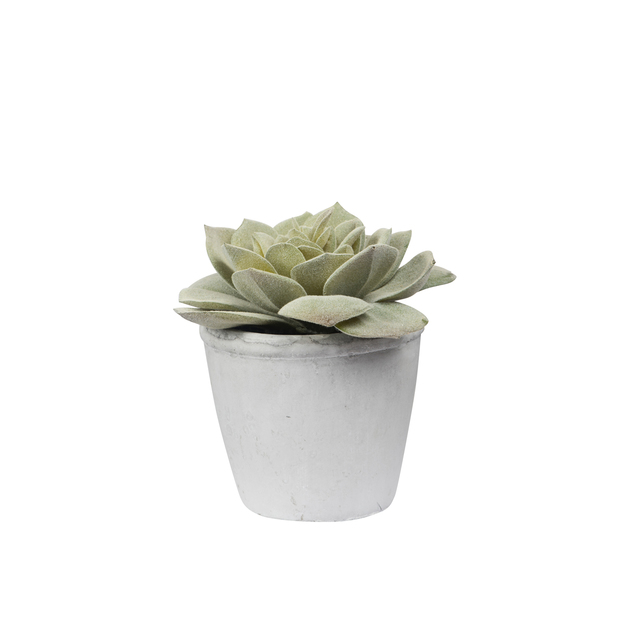 General Eclectic: Artificial Plant - Echeveria Succulent