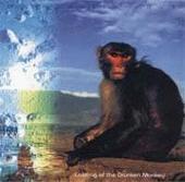 Calming Of Drunken Monkey by Salmonella Dub