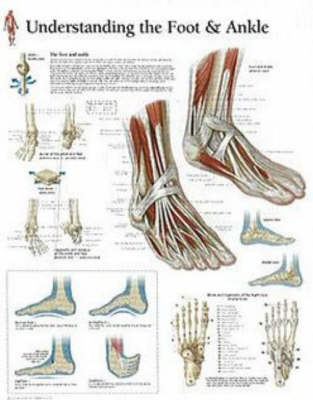 Understanding the Foot and Ankle image