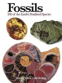 Fossils image