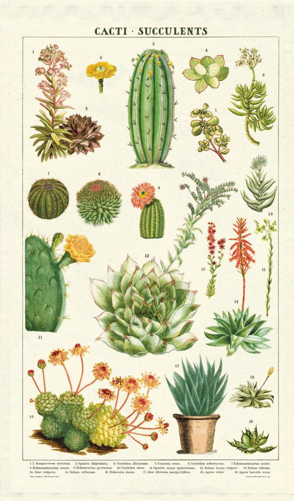 Cacti Tea Towel image
