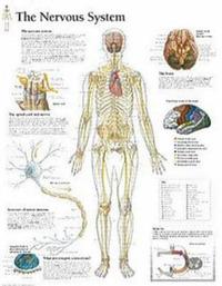 Nervous System image