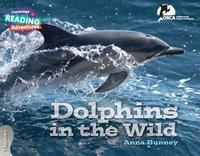 Dolphins in the Wild 3 Explorers by Anna Bunney image