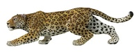 Papo - Leopard