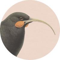 100 Percent NZ - Huia Ceramic Coaster