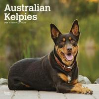 Australian Kelpies 2020 Square Wall Calendar by Inc Browntrout Publishers