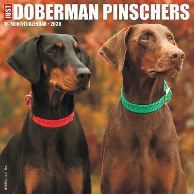 Just Dobermans 2020 Wall Calendar (Dog Breed Calendar) by Willow Creek Press