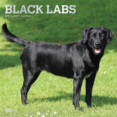 Labrador Retrievers, Black 2019 Square Wall Calendar by Inc Browntrout Publishers image