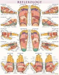 Reflexology-Laminated by BarCharts Inc