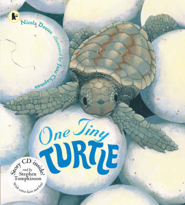 One Tiny Turtle Pbk With Cd by Nicola Davies image