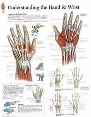 Understanding the Hand and Wrist image