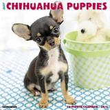 Just Chihuahua Puppies 2018 Wall Calendar (Dog Breed Calendar) by Willow Creek Press