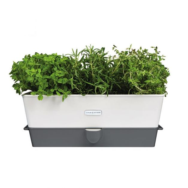 Cole & Mason: Self Watering Herb Keeper