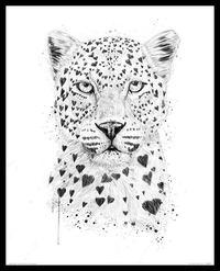 Balazs Solti Framed Illustration - Lovely Leopard