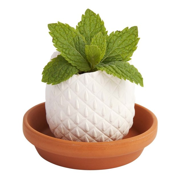Pineapple - Peppermint Crack & Grow Kit
