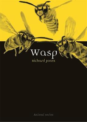 Wasp by Richard Jones image