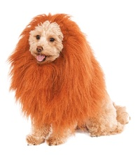 Rubie's: Lion's Mane - Deluxe Pet Costume (One Size)