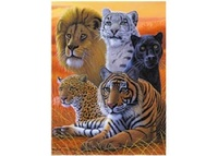 3D LiveLife: Big Cats Poster