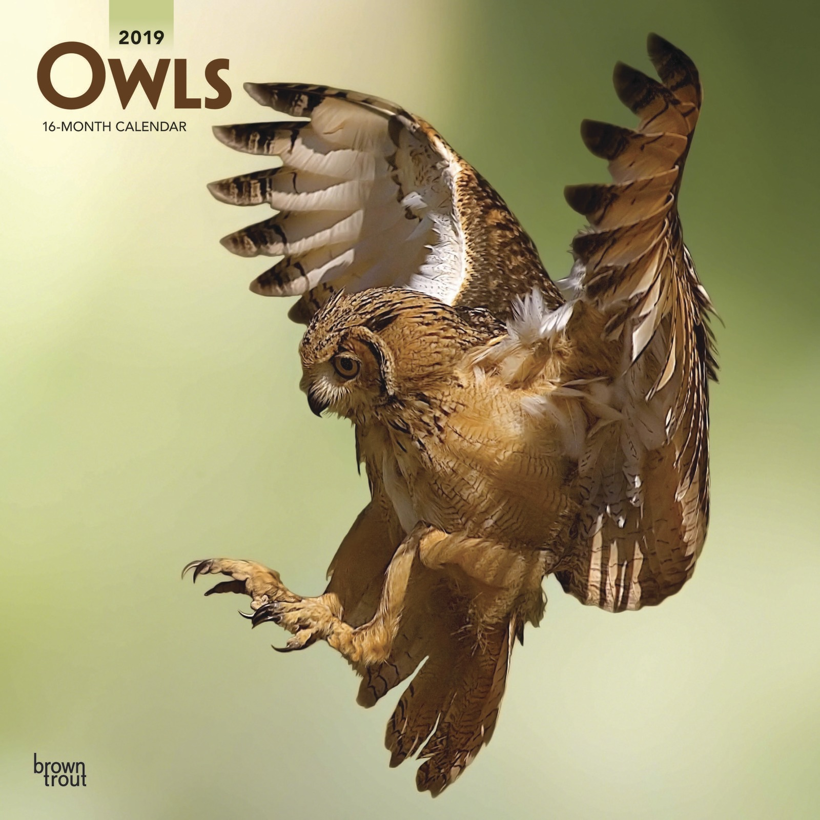 Owls 2019 Square Wall Calendar by Inc Browntrout Publishers image