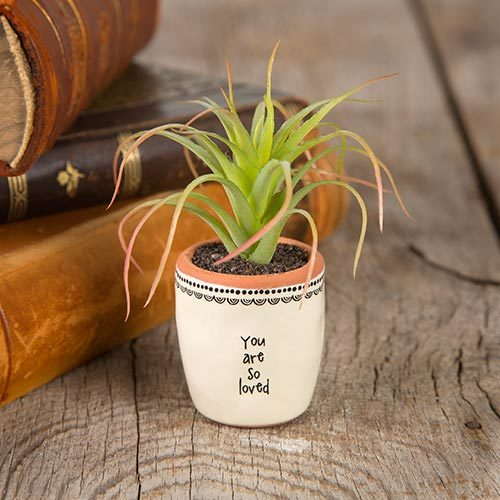 Natural Life: Succulent - You Are Loved