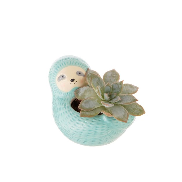 Seymour Sloth Mini Plant Pot