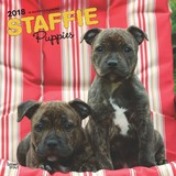Staffordshire Bull Terrier Puppies 2018 Square Wall Calendar
