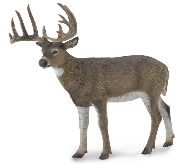 CollectA - White Tailed Deer (L)