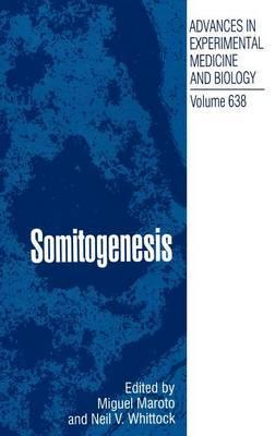 Somitogenesis image