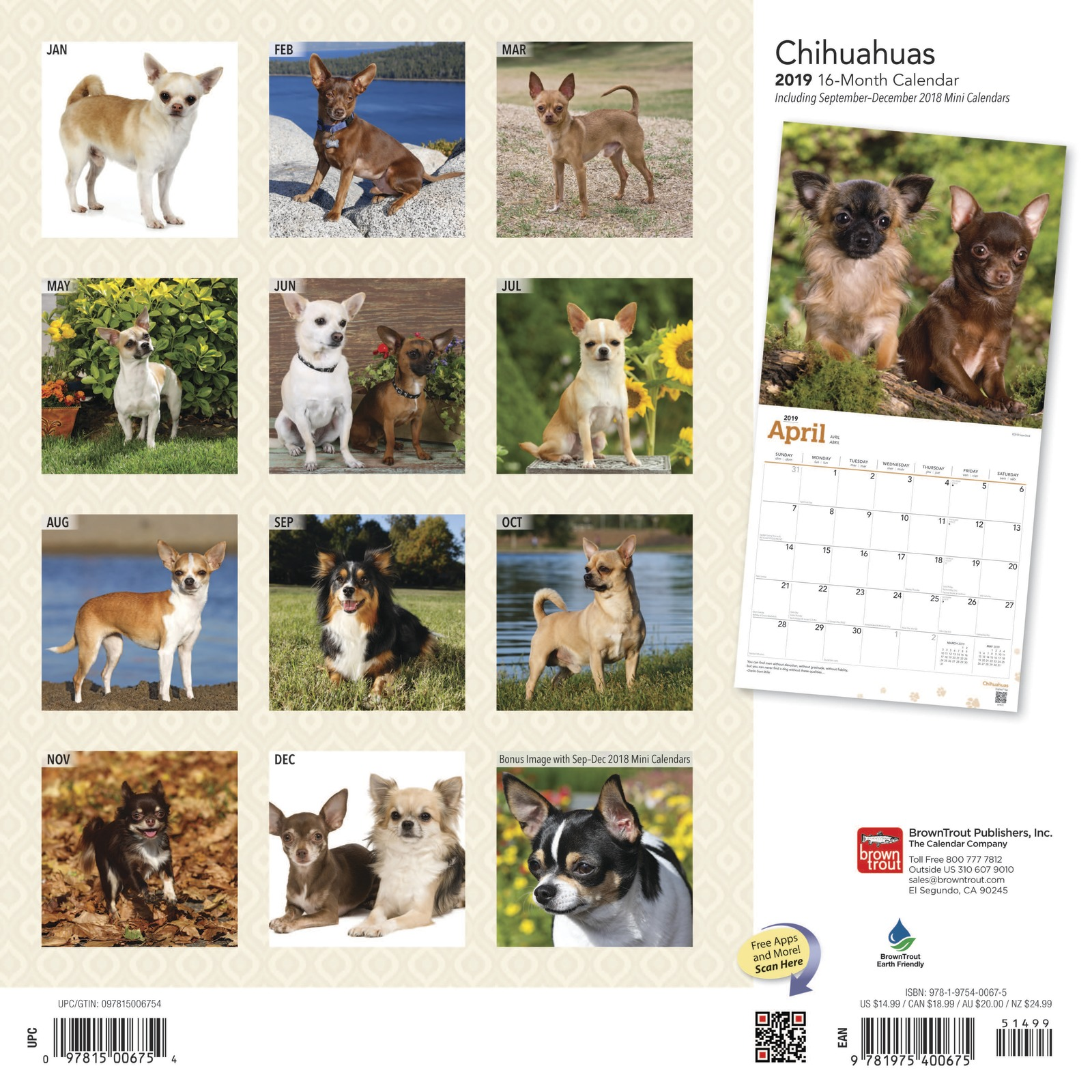 Chihuahuas 2019 Square Wall Calendar by Inc Browntrout Publishers image